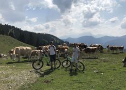 HourAway Bike Tours Slovenia Custom Tour